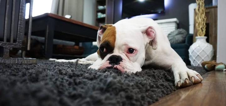 departamento y mascotas