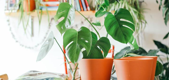 tener plantas departamento nuevo santuario plantas