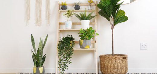 tener plantas departamento nuevo