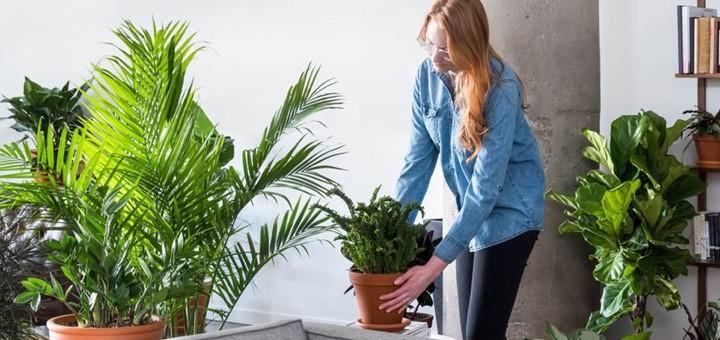 tener plantas departamento beneficios salud