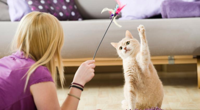 Pet Friendly actividades que puedes hacer con tu mascota en tu propio depa